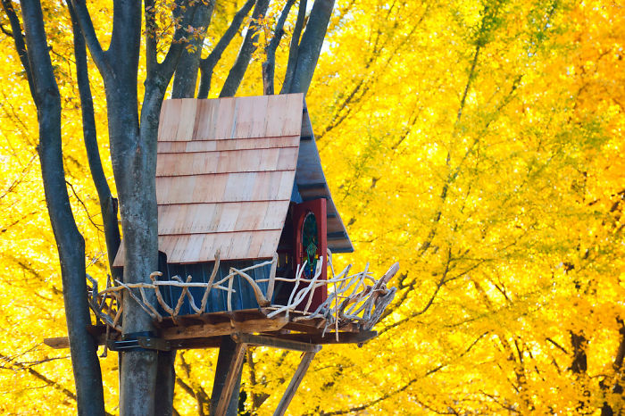 Post-The-Most-Beautiful-Treehouses-From-All-Over-The-World4__700